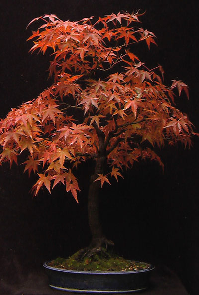 The Art of Bonsai With...