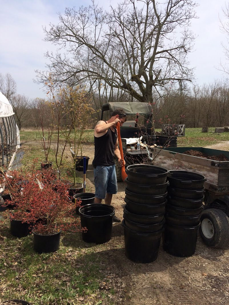 Chris potting up maples